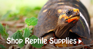 Reptile Supplies