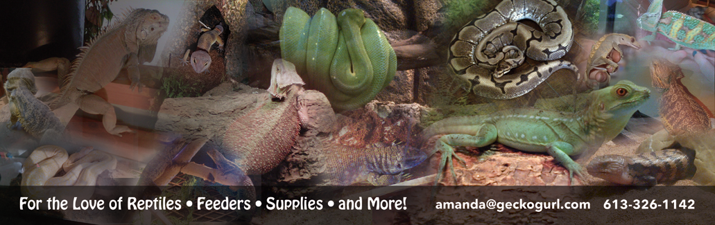 Ottawa reptile supplies
